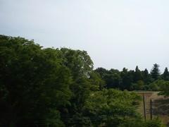 東京タワー方向は、林で邪魔されています。.jpg