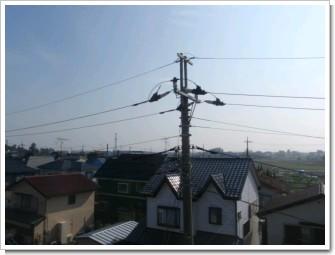 鷲宮町葛梅A様 東京タワー方向の景色。.JPG